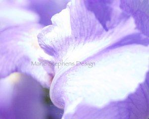 watermark Iris lavender macro abstract