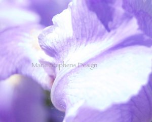 watermark Iris lavender macro abstract