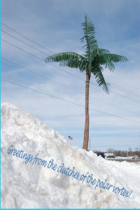 watermark-2greetings-from-polar-vortex-palm-tree-postcard