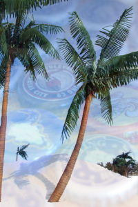 watermark-palm-trees-snow-and-bottle-caps