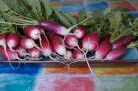 watermarkradish french breakfast 8 x 12